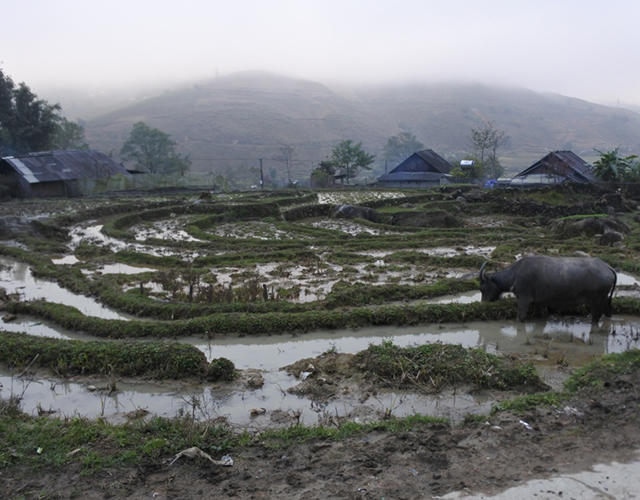 In the north of VietNam, in SaPa county...