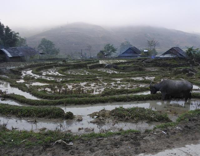 Dans le Nord du Vietnam... région montagneuse de SaPa